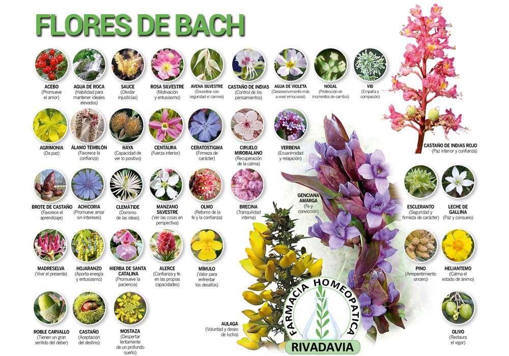 Flores De Bach Farmacia Homeopatica Rivadavia En Cordoba